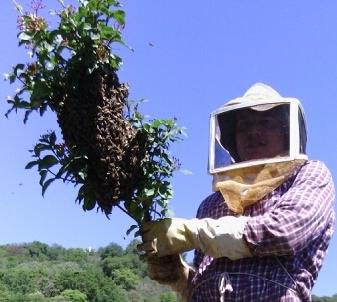 News Max and Bees